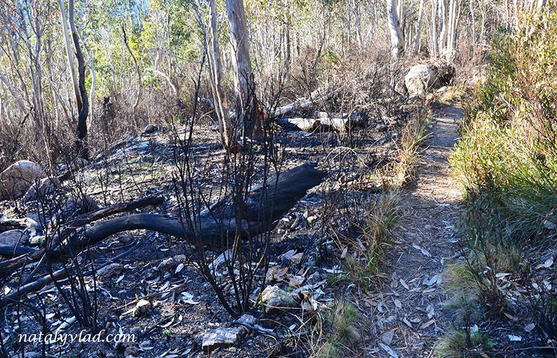 Австралия Выгоревший лес Лесные пожары