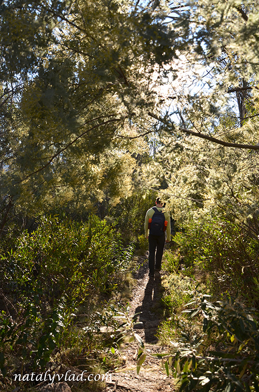 Австралия Лес Природа Пешие треки Намаджи Парк