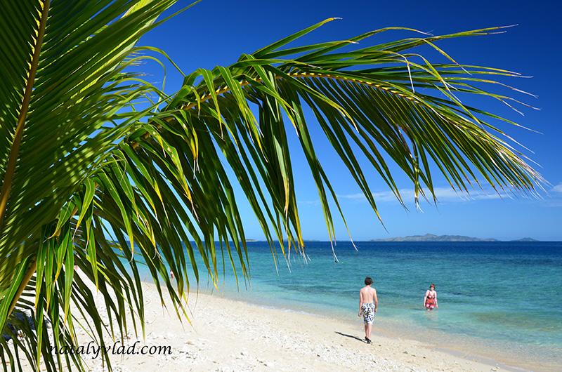 Фиджи острова отдых, Ветка пальмы пляж и море
