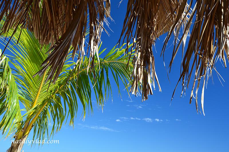 Фиджи, Пальма небо