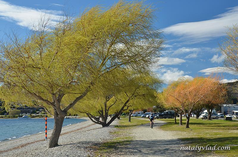 Новая Зеландия Ванака озеро цветущее дерево