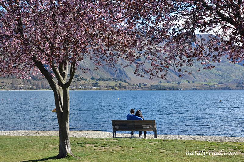 Новая Зеландия Ванака озеро Набережная скамейка под вишней