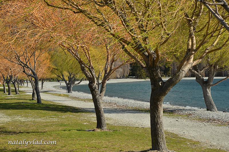 Новая Зеландия отдых Ванака озеро набережная деревья в цвету
