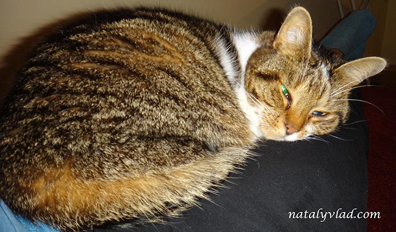 Коты и кошки в Австралии Животные