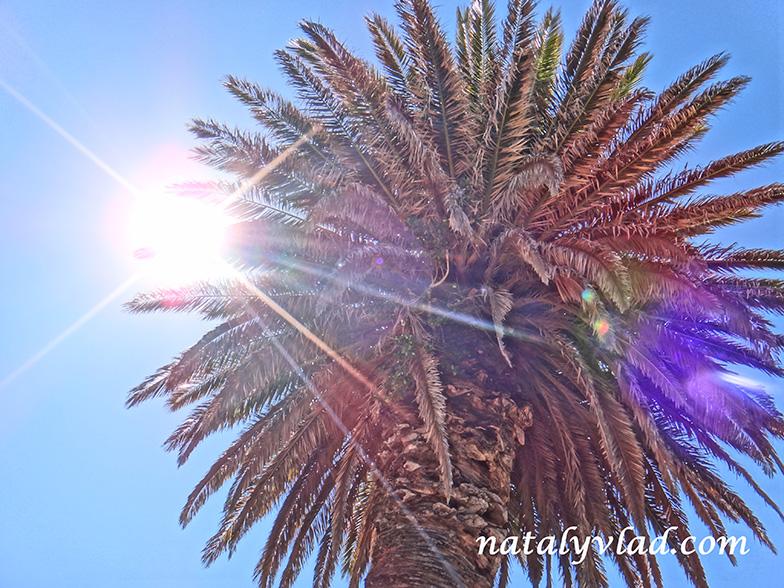 Блог о жизни в Австралии Мельбурн погода Пальма на солнце