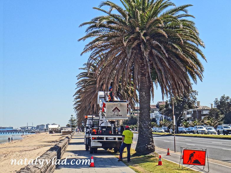 Блог о жизни в Австралии Мельбурн пальмы набережная