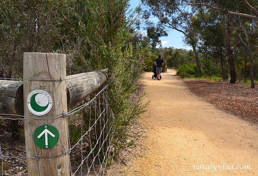 Прогулки с детской коляской в парке в лесу