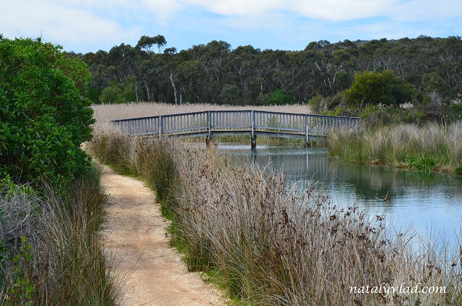 Деревянный мост и тропа у реки