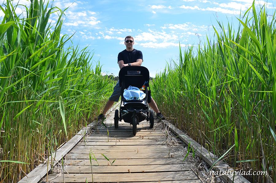 Детская коляска на деревянных мостках среди высокой травы