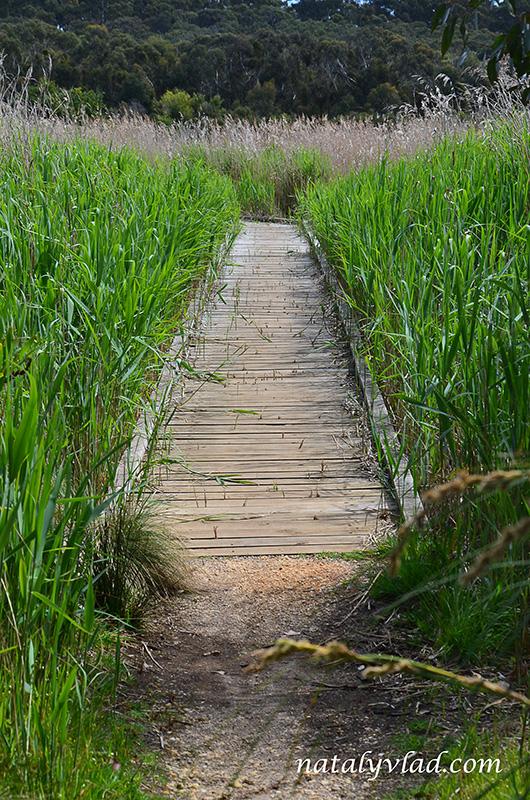 Деревянные мостки среди высокой травы