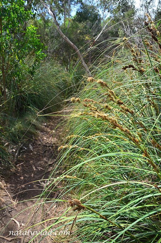 Тропа в лесу с высокой травой