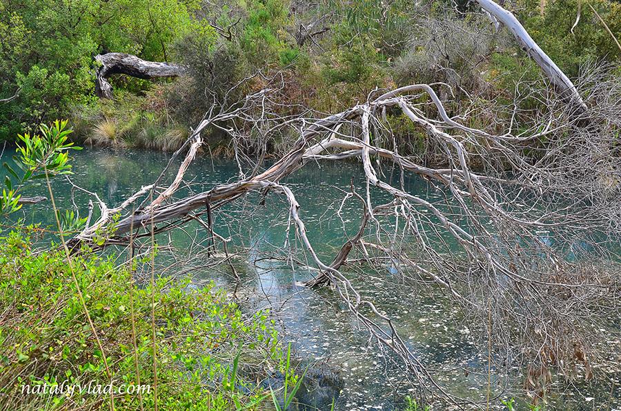 Сухое дерево в застоявшейся реке