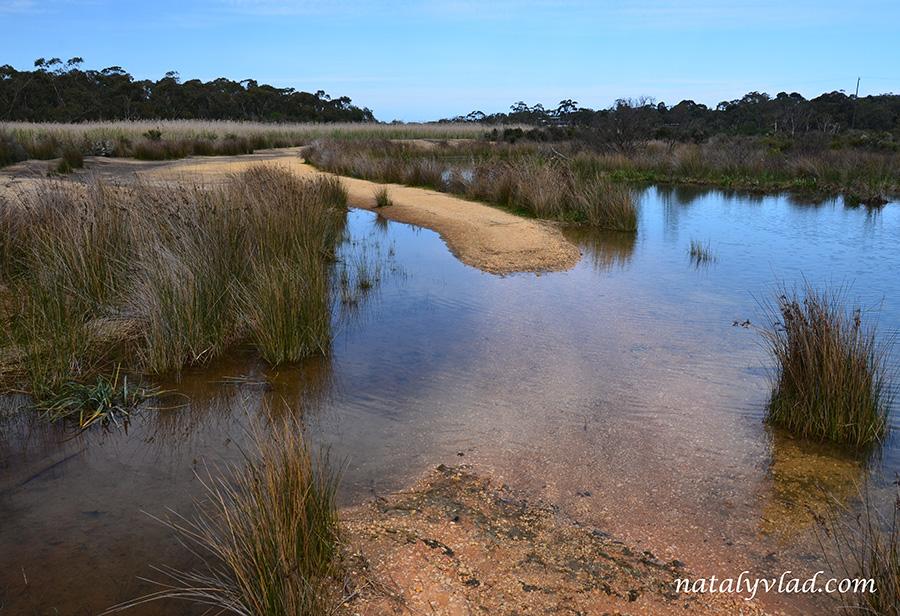 Заболоченная зона у реки песчаный берег