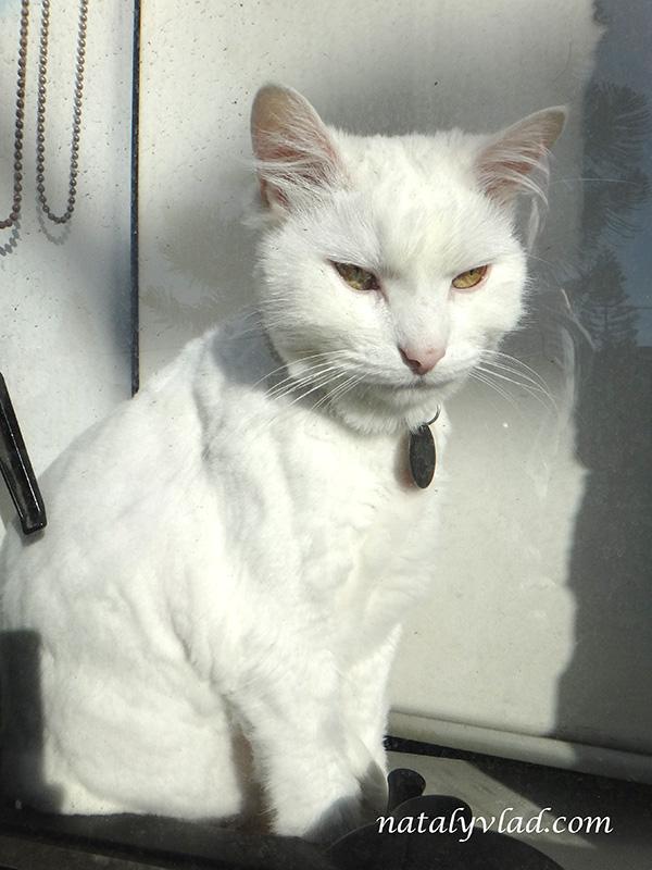 Белый кот в окне