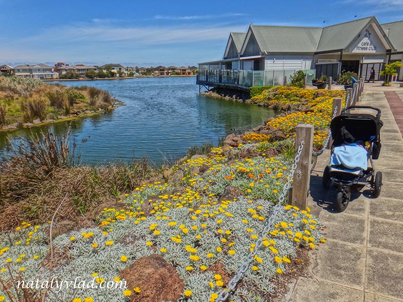 Жизнь в Австралии Озеро с цветами