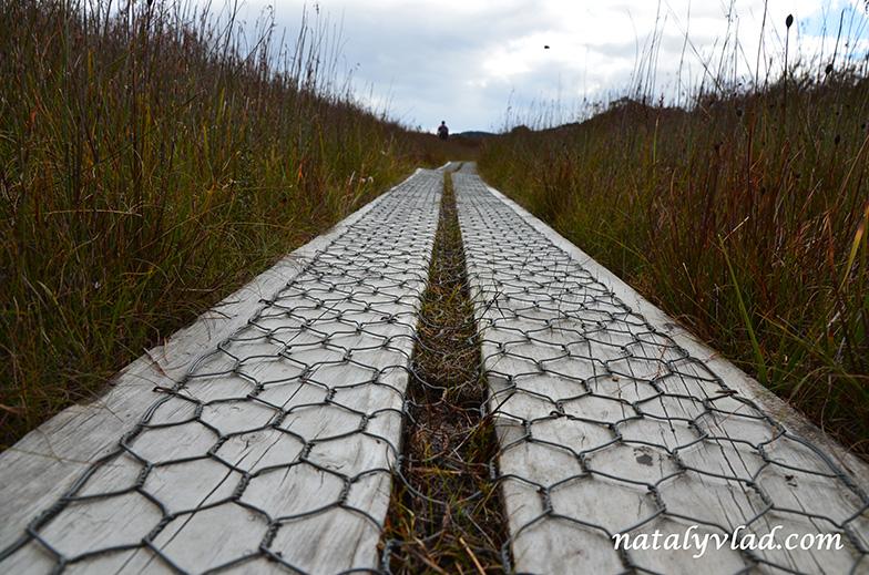 Природа и пешие треки на Тасмании