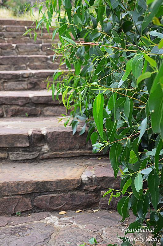Австралия Грампианс Лесенка Зеленый куст