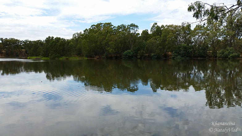 Отражения деревьев в речной воде