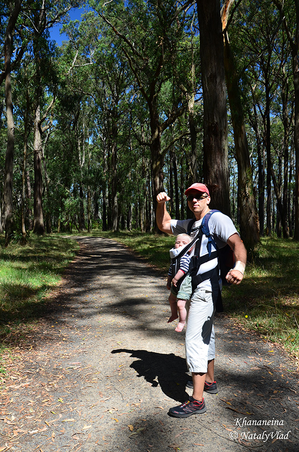 Австралия Путешествие Данденонг