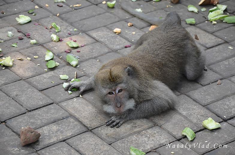Отдых на Бали Парк с обезьянами