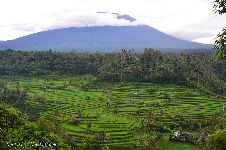 Бали Гора Агунг и рисовые поля