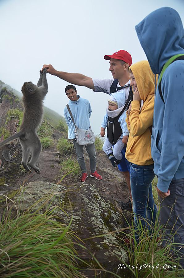 Бали Гора Батур Обезьяны
