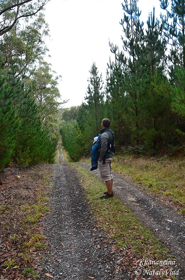 Блог о жизни в Австралии Грибы