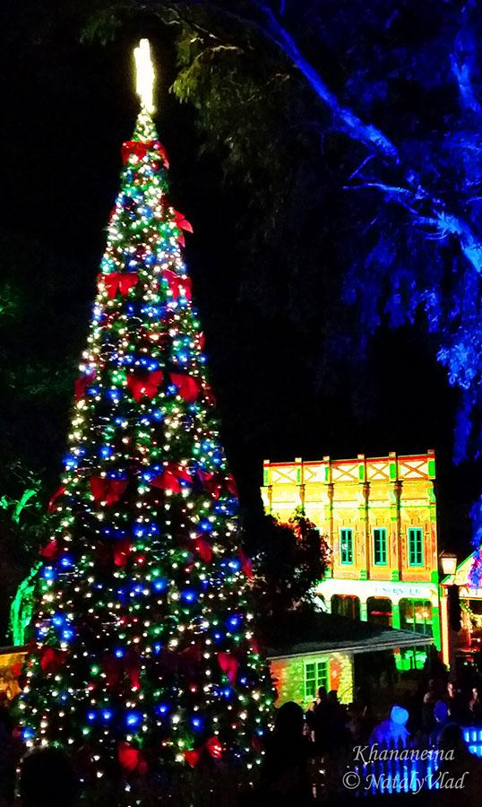 Жизнь в Австралии Рождество