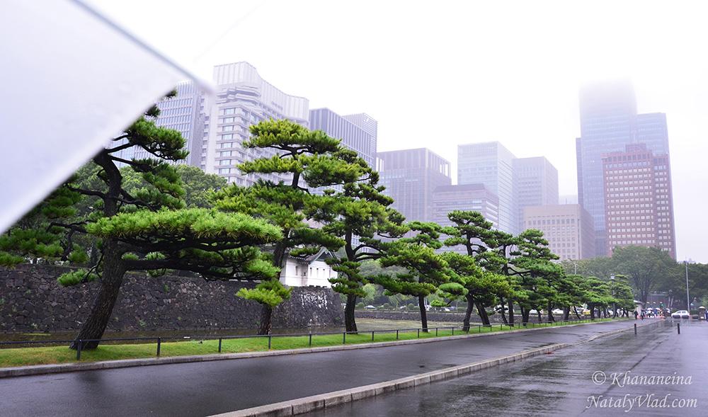 Путешествие по Японии Токио Фото