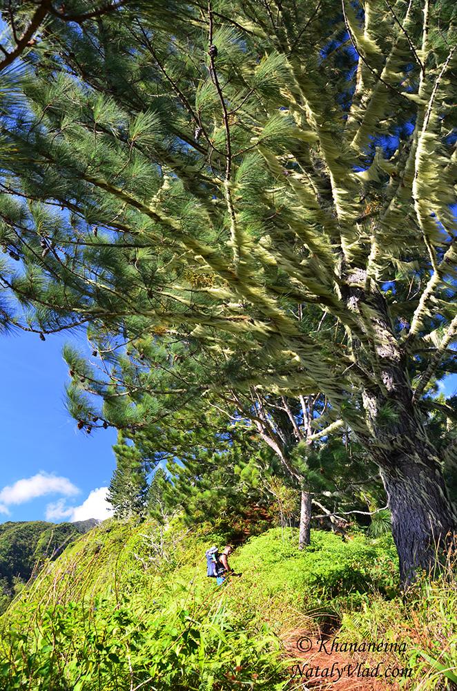 Отдых на Таити фото