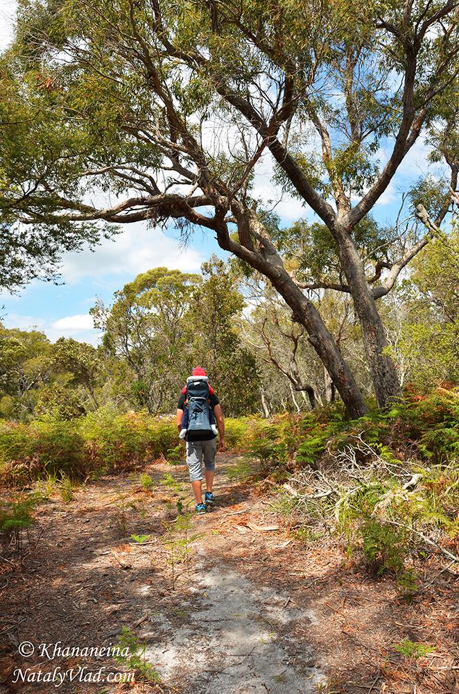 Путешествие по Тасмании фото