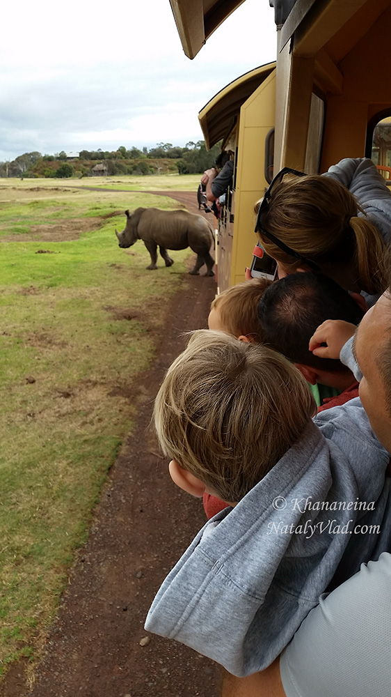 Зоопарки в Австралии Фото