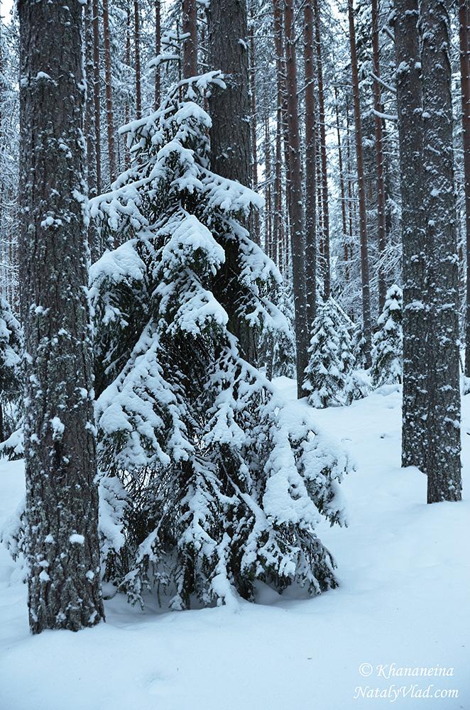 Зимний лес в снегу Фото