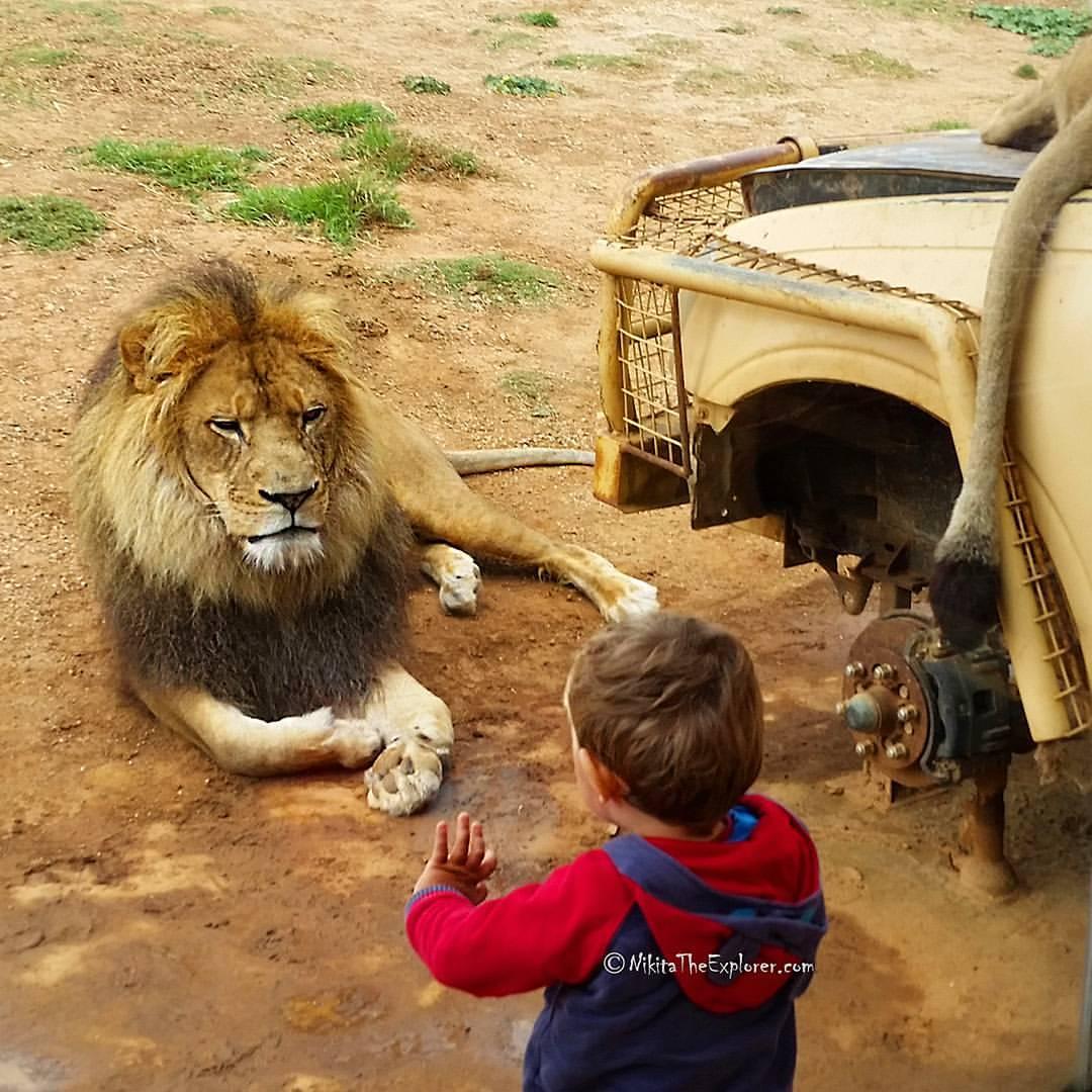 Зоопарки в Австралии