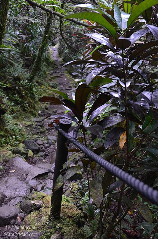 Отдых на Таити Природа Фото