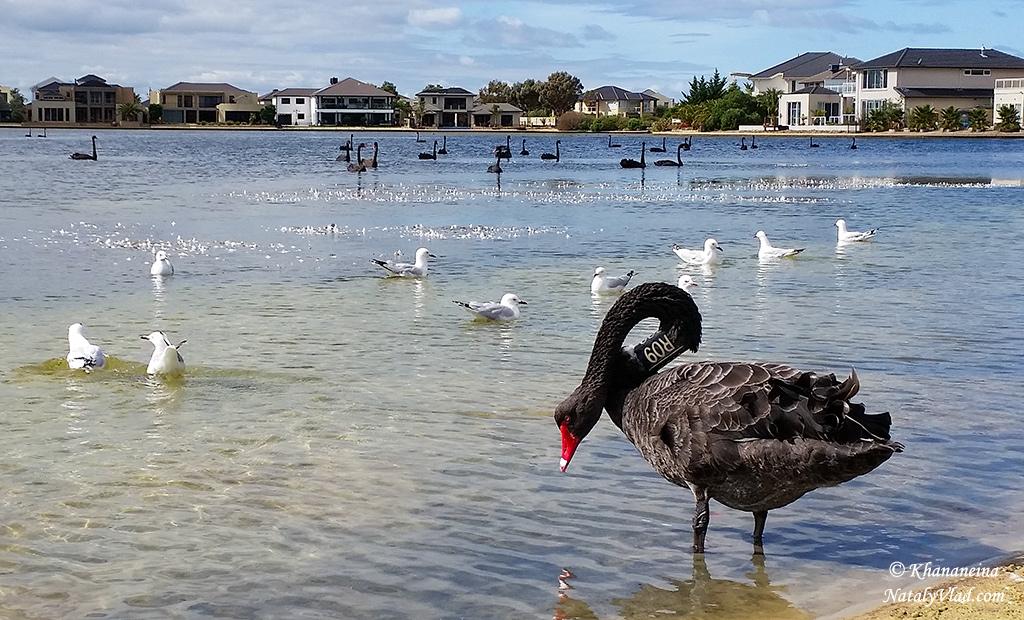 Жизнь в Австралии Блог